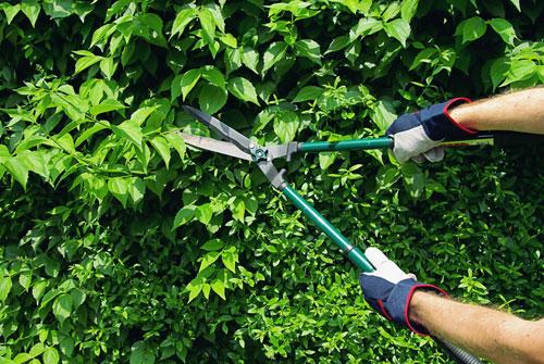 Come piantare la siepe di lauro | Fai da Te Mania